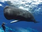 whalediver